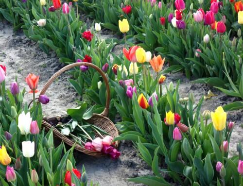 Die Jahreszeiten erleben: Saisonale Angebote gestalten